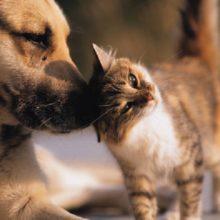 FDA Alert: Major Pet Food Brands Recalled as Potentially Deadly