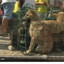 Taiwan Becomes First Asian Country to Ban Eating Dog and Cat Meat