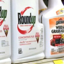 Roundup Weed Killer Ingredient Going on California Cancer List